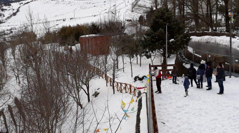 floresta parco neve