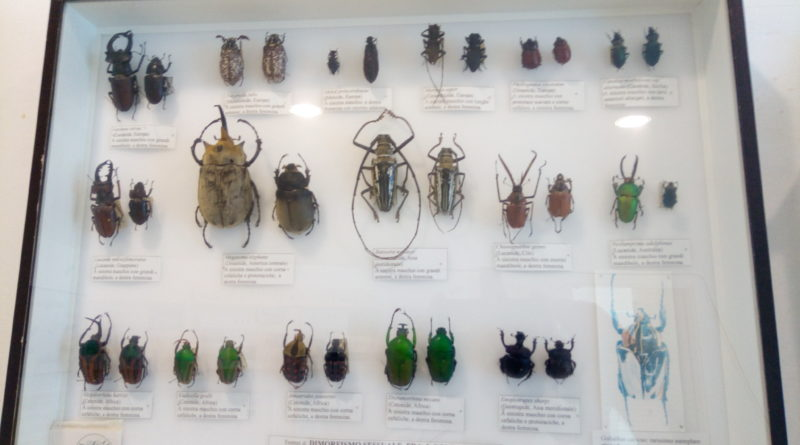 mostra insecta