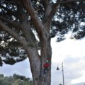 terme vigliatore 2 albero