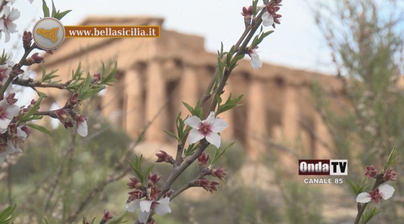 2 Agrigento festa del mandorlo in fiore